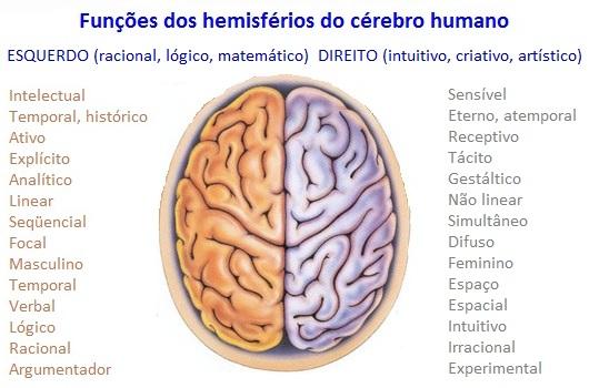 funções hemisférios cerebrais